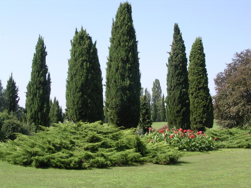 Cipressi_Parco_Sigurtà